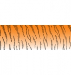 tiger fur vector image