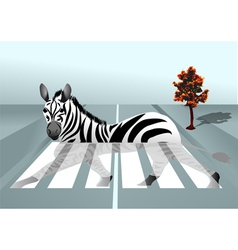 zebra in the city vector image