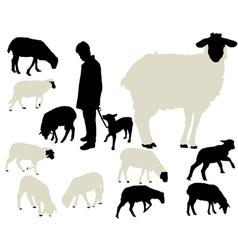 Sheep vs vector