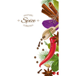 spice vertical banner vector image