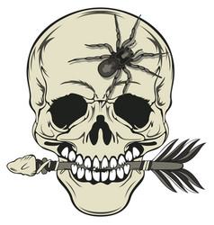 skull with arrow and spider vector image