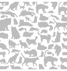 Cat a background vector