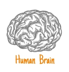 Human brain sketch symbol in gray colors vector image