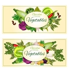 Garden vegetables posters banners vector image vector image