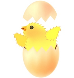 Chick egg vector