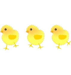 three chick vector image vector image