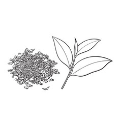 Hand drawn pile of dry tea and fresh leaf vector