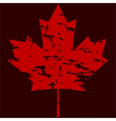 Maple leaf grunge vector image