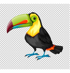 toucan bird on transparent background vector image