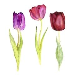 Three watercolor tulips vector