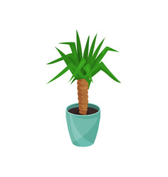 Yucca houseplant in blue pot vector