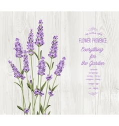 The lavender bouquet vector