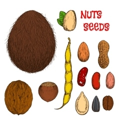 Healthy nutritious nuts beans and seeds sketches vector
