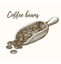Scoop with coffee beans vector