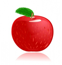 apple red vector image vector image