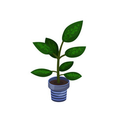 dieffenbachia houseplant potted plant vector image vector image