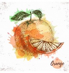 Watercolor orange sketch vector