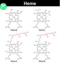 Heme molecules with marked variable fragments vector