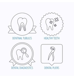 Healthy teeth dentinal tubules and pliers icons vector