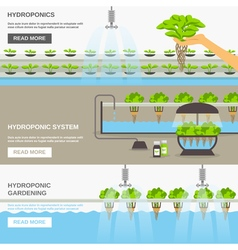 Hydroponic system vector