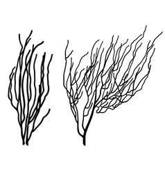 corals vector image