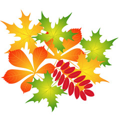 Composition of autumn leaves vector