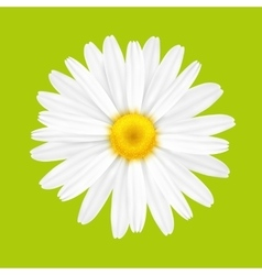 White spring flower vector