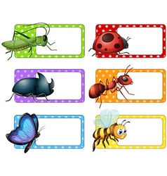 Square labels and many insects vector image