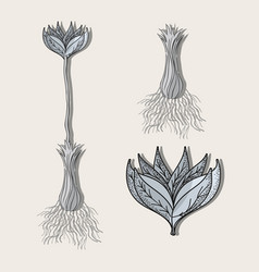 Flower plant processing herbal botany vector