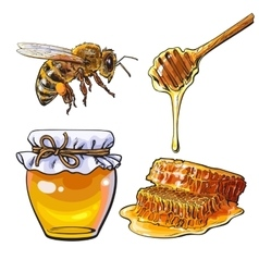 Jar of honey bee dipper and honeycomb on white vector