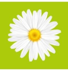 White spring flower vector image vector image