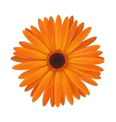 Bright spring flower vector