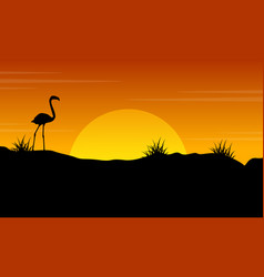 Beauty scenery flamingo at sunset silhouette vector