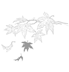 Contour drawing twig with maple leaves fall vector