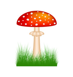 amanita standing in grass vector image