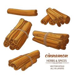 cinnamon set vector image vector image