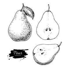 pear drawing isolated hand drawn full pear vector image vector image