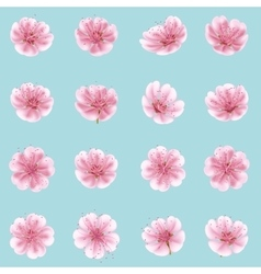 Sakura flowers icon set isolated eps 10 vector