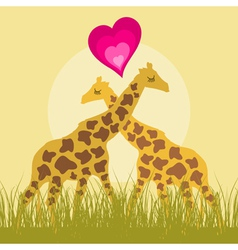 two loving giraffes vector image