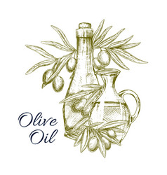 Sketch poster of olives and olive oil vector