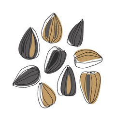 Sunflower seeds vector
