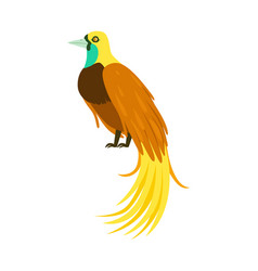 Tropical bird with long feathers colorful vector