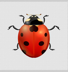Close-up realistic ladybug insect icon vector