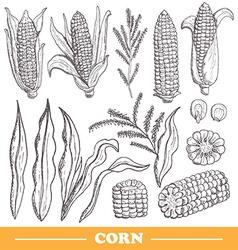 hand drawn corns set vector image vector image