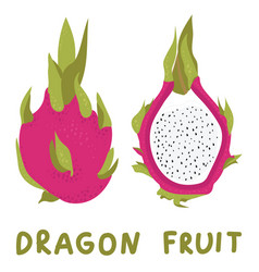 hand drawn whole dragon fruit and half vector image vector image