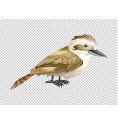 Kookaburra bird on transparent background vector