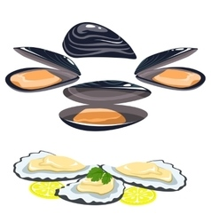 Sea food shells of oysters mussels lemon and lime vector