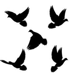Set doves vector image vector image