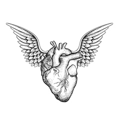 Hand drawn elegant heart with wings black sketch vector image