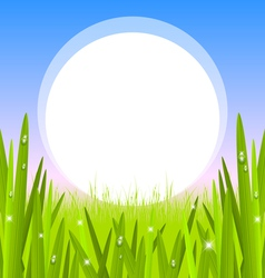 Morning grass with copy space vector